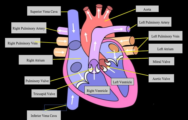 SmartLabel Heart Lesson - Featured Image